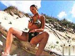 כוסיות חוף מגרות לטיניות כוסיות
